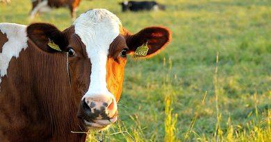 Proč se vyvarovat konzumace masa aneb biologicko-historické znaky člověka