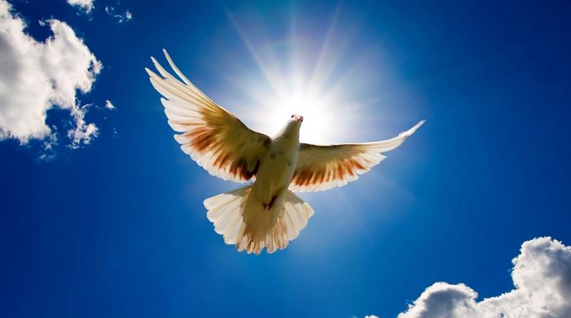 Holubice míru